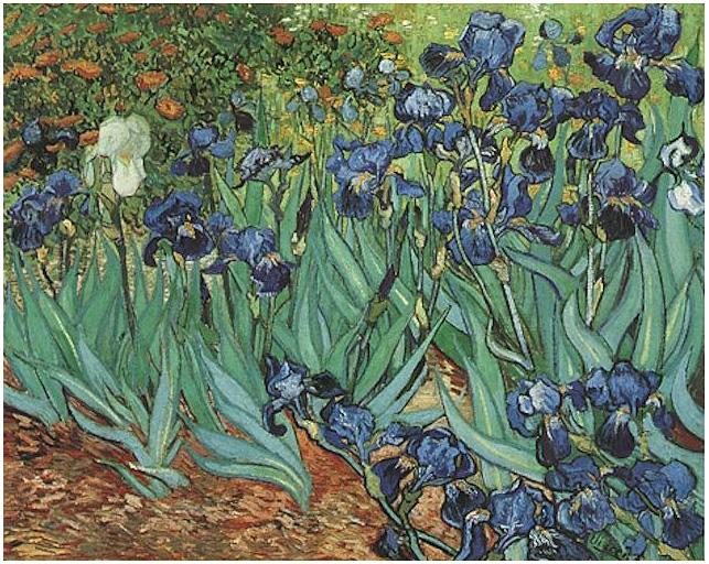 Irises Van Gogh Gallery
